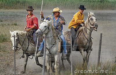 Camargue Cowboys