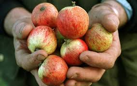 Apples of Normandy.