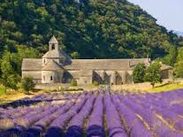 Lavender field around L'Abbaye of Senanque