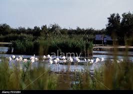 Wild Camargue and the birds.
