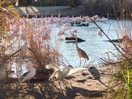 Wild Camargue, a sanctuary of birds
