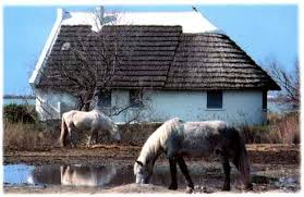 Cabanes in Camargue.